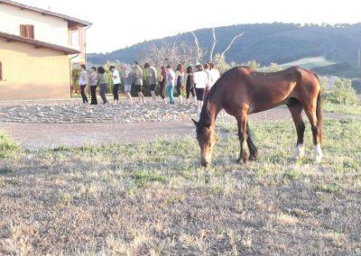 Yoga e il cavallo Pago